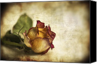 Rose Digital Art Canvas Prints - Wilted rose Canvas Print by Veikko Suikkanen
