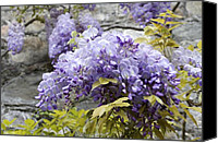 Vevey Canvas Prints - Wisteria Wall Canvas Print by Colleen Williams