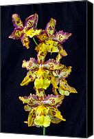 Wonderful Canvas Prints - Wonderful Orchid Canvas Print by Garry Gay