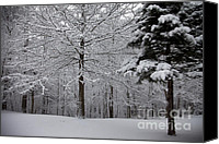 Amanda Barcon Canvas Prints - Woods View Canvas Print by Amanda Barcon