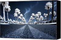 Palm Trees Canvas Prints - X Canvas Print by Sean Foster