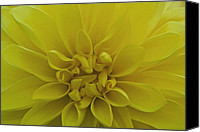 Bud Special Promotions - Yellow Burst Canvas Print by Chris Holmes