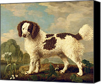 Norfolk Painting Canvas Prints -  Brown and White Norfolk or Water Spaniel Canvas Print by George Stubbs