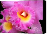 Cattleya Canvas Prints -  Cattleya Orchid 1 Canvas Print by Julie Palencia