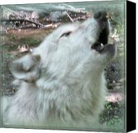 Wolf Photo Shot Canvas Prints -  Connection Canvas Print by Debra     Vatalaro