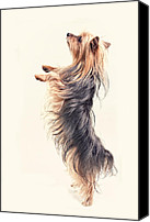 Dog Photo Canvas Prints -  Dancing Yorkshire Terrier Canvas Print by Susan Stone