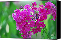 Michele Carter Canvas Prints -  Flower Canvas Print by Michele Carter