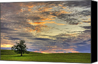Rural Photo Canvas Prints - Lonley Tree Canvas Print by Matt Champlin