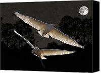 Hera Mixed Media Canvas Prints -  Majestic Great Egrets  Canvas Print by Eric Kempson
