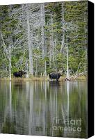 White Mountains Canvas Prints -  Nancy Pond - White Mountains New Hampshire USA Canvas Print by Erin Paul Donovan