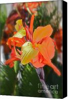 Canna Canvas Prints -  Orange Bright Canvas Print by Maureen J Haldeman