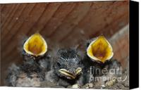 Impressionism Pyrography Canvas Prints -  Raising baby birds  www.pictat.ro Canvas Print by Preda Bianca Angelica