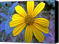 Flower Special Promotions -  Sunroot Color Compliment Canvas Print by Dave Dresser