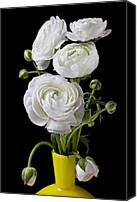 Fragile Canvas Prints -   White ranunculus in yellow vase Canvas Print by Garry Gay
