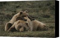 Denali Canvas Prints - A Grizzly Mother And Her Cub Lounge Canvas Print by Michael S. Quinton