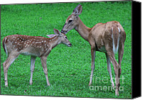 Animals Special Promotions - A Mothers Kiss Canvas Print by Lee Dos Santos