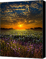 Fall Leaves Canvas Prints - A New Day Canvas Print by Phil Koch