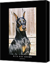 Dobe Canvas Prints - Adonis Canvas Print by Rita Kay Adams
