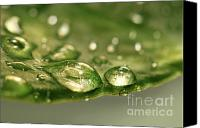 Greenish Canvas Prints - After the rain Canvas Print by Sandra Cunningham