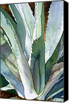 Watercolor Landscape Canvas Prints - Agave 1 Canvas Print by Eunice Olson