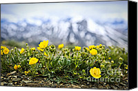 Rocky Mountains Canvas Prints - Alpine meadow in Jasper National Park Canvas Print by Elena Elisseeva