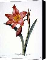 1833 Canvas Prints - Amaryllis Canvas Print by Granger