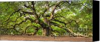Beautiful Tree Canvas Prints - Angel Oak Tree of Life Canvas Print by Dustin K Ryan