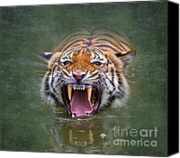 Anger Digital Art Canvas Prints - Angry Tiger Canvas Print by Louise Heusinkveld