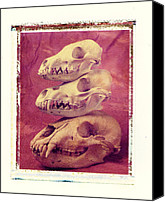 Skull Canvas Prints - Animal Skulls Canvas Print by Garry Gay