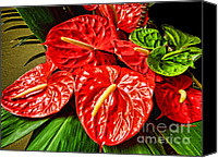 Boy Room Art Canvas Prints - Anthurium  Canvas Print by Cheryl Young