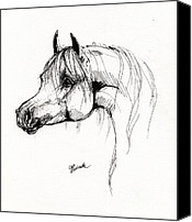 Horse Drawings Canvas Prints - Arabian Horse Drawing 6 Canvas Print by Angel  Tarantella