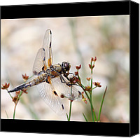 Dragonfly Canvas Prints - #arthropods_anonymous Canvas Print by Leni Papilio