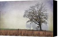 Country Scenes Photo Canvas Prints - As The Fog Sets In Canvas Print by Jan Amiss Photography