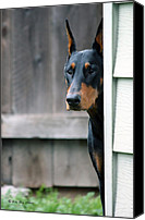 Dobe Canvas Prints - Attentive Canvas Print by Rita Kay Adams