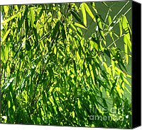 Macro Photography Canvas Prints - Bamboo Canvas Print by Kristin Kreet