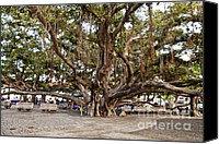 Lahaina Canvas Prints - Banyan Tree Canvas Print by Scott Pellegrin