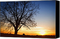 Skip Nall Canvas Prints - Bare Tree At Sunset Canvas Print by Skip Nall