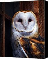 Barn Digital Art Canvas Prints - Barn Owl  Canvas Print by Anthony Jones