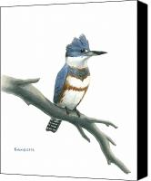 Kingfisher Canvas Prints - Belted Kingfisher Perched Canvas Print by Kalen Malueg