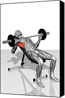 Training Canvas Prints - Bench Press Incline (part 2 Of 2) Canvas Print by MedicalRF.com