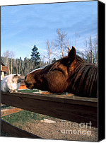 Montana Digital Art Canvas Prints - Best Friends Canvas Print by Thomas R Fletcher