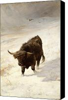 Bison Canvas Prints - Black Beast Wanderer Canvas Print by Joseph Denovan Adam