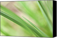 Abstract Photo Canvas Prints - Blades of Grass Canvas Print by Bonnie Bruno