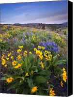 Hillside Canvas Prints - Blue and Gold Canvas Print by Mike  Dawson