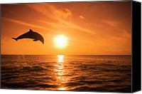 Carefree Canvas Prints - Bottlenose Dolphin (tursiops Truncatus) Jumping Out Of Water, Sunset Canvas Print by Rene Frederick