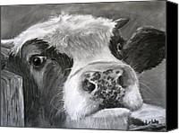 Cow Drawings Canvas Prints - Bovine Curiosity Canvas Print by Janae Lehto