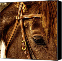 Bridle Canvas Prints - Bridled Canvas Print by David Patterson
