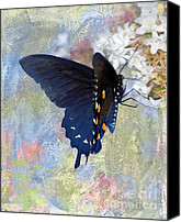 Pipevine Swallowtail Butterfly Digital Art Canvas Prints - Butterfly Love Canvas Print by Betty LaRue