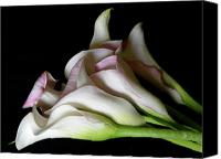 Calla Lily Canvas Prints - Calla Lily Canvas Print by Laura Yamada