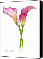 Kim Bird Canvas Prints - Callas Canvas Print by Kim Bird